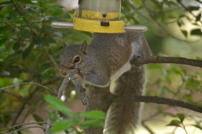 Squirrel-Proof Finch Feader.jpg
